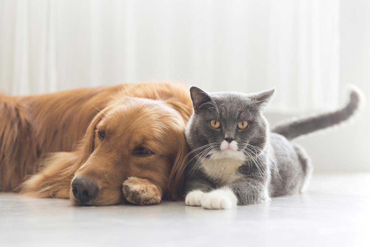 about our veterinary practice  Estero, FL